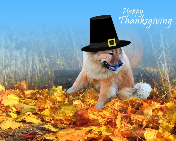 Happy Thanksgiving from the Holmes Veterinary Gang!